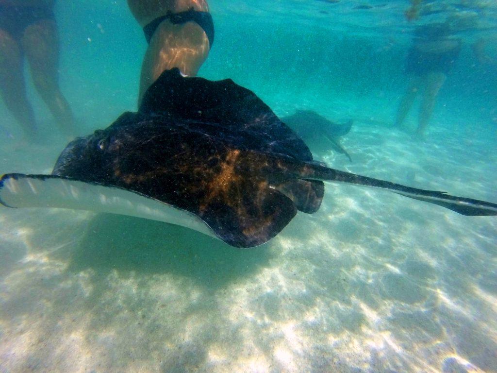 Nuotata nella piscina naturale a Stingray City Antigua