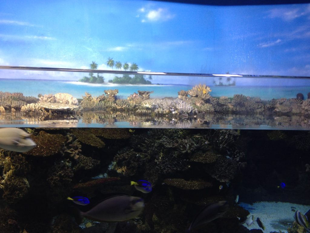 L'acquario di Barcellona